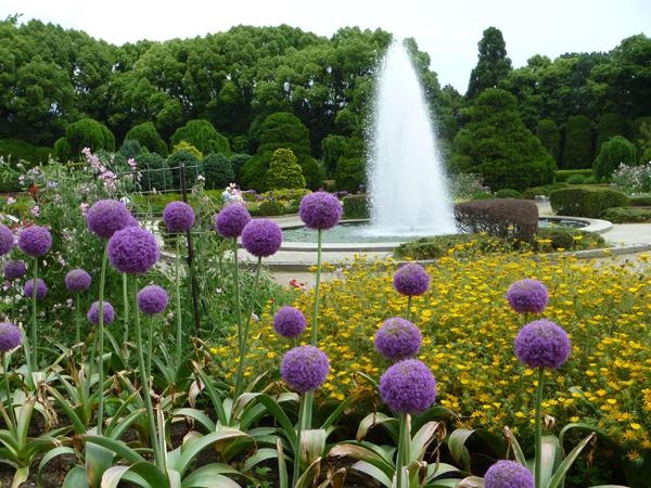 6-26京都府立植物園-2