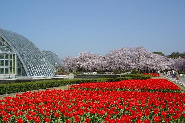 6-26京都府立植物園-1