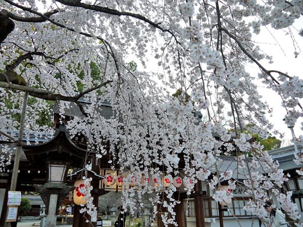平野神社収益-4